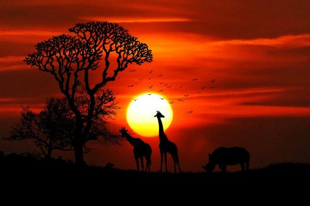 Dinesen's Africa